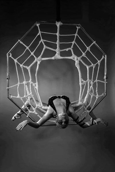 Spider's web by Evolve Entertainment